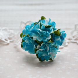 Цветы астры, Голубые