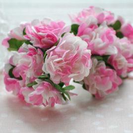 Цветы астры, Розово-белые