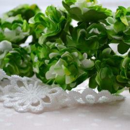 Цветы астры, Зелено-белые