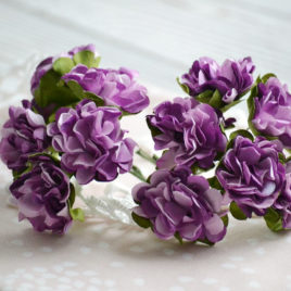 Цветы астры, Фиолетовые