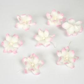 Фиалки Розово-белые
