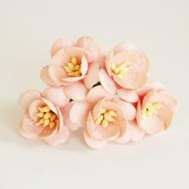 Цветы Вишни Розово-персиковые
